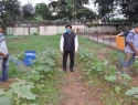 After World's Largest Solar Tree CSIR-CMERI Develops Affordable Solar Sprayers for Agriculture
